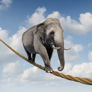 Elephant Risk. 2